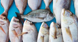 Βάρκα Ψάρια 1