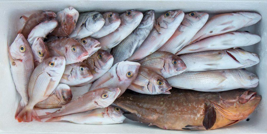 Ψάρια μας